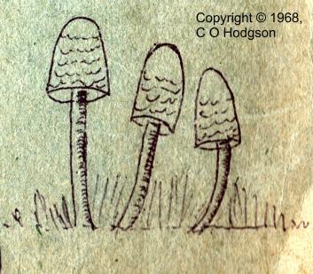 fungi_coh