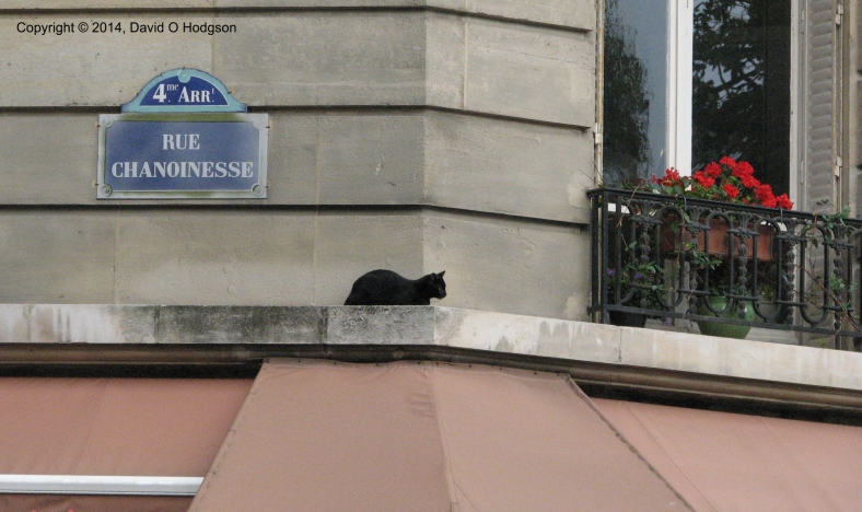 Cat on a Ledge, Paris 2014