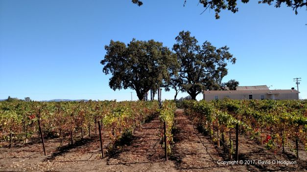 A Laughlin Road Vineyard, Sonoma County