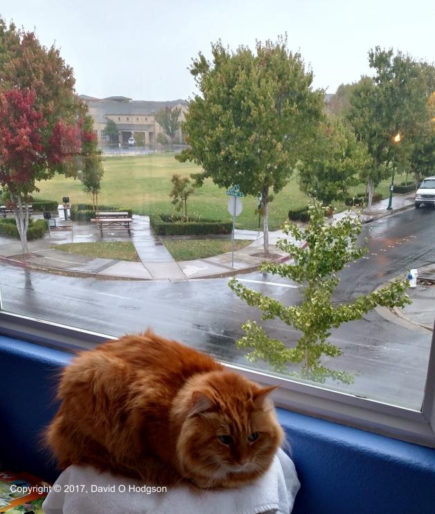 Penny Contemplates the Rain