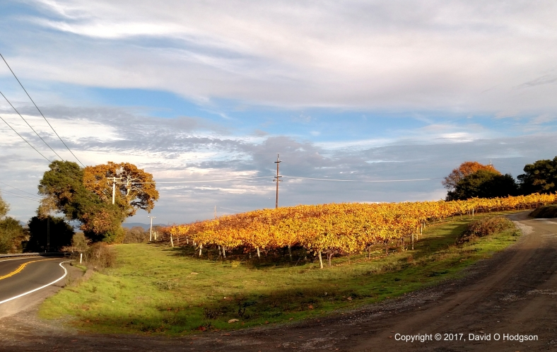 Autumnal Vineyard, Occidental Road