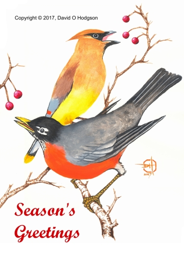 Sonoma Winter Birds
