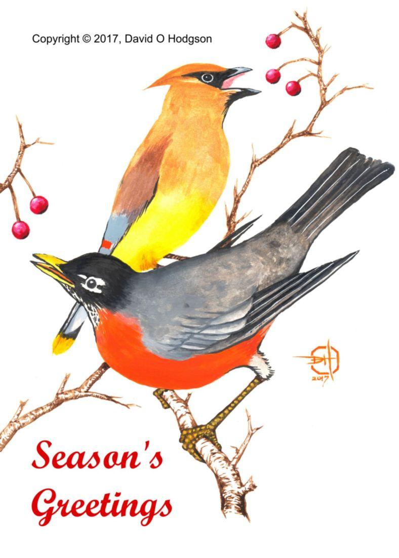 Sonoma Winter Birds