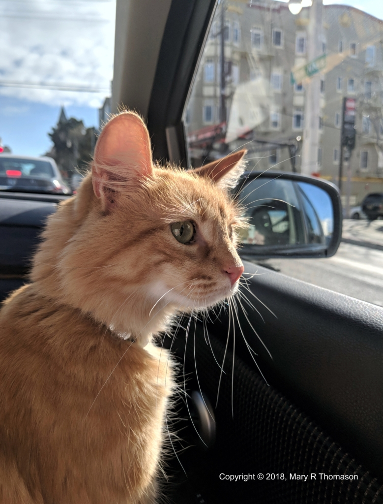 Ginger in the City