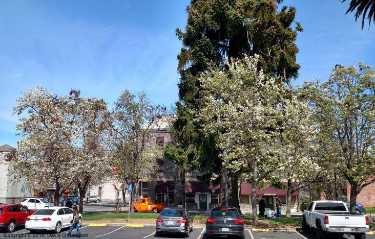La Rose Hotel, Santa Rosa