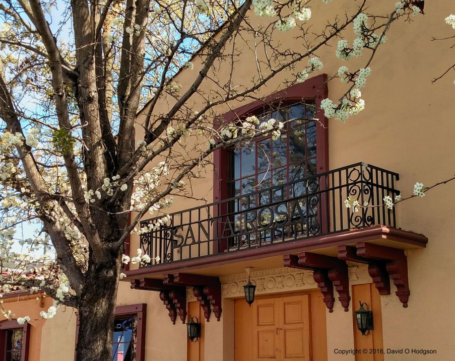 Tree Blossom at the Railroad Depot, Santa Rosa