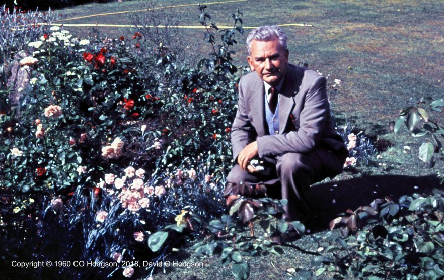 My Father with his Roses, c.1960