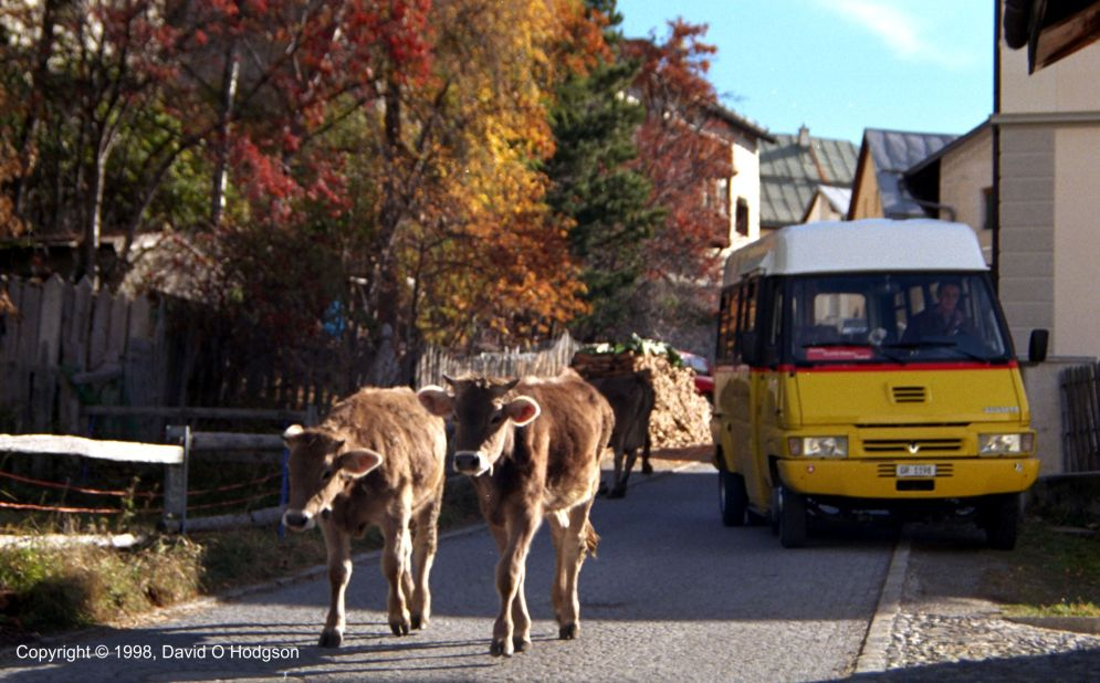 Postbus & Cows, Engadin, Switzerland