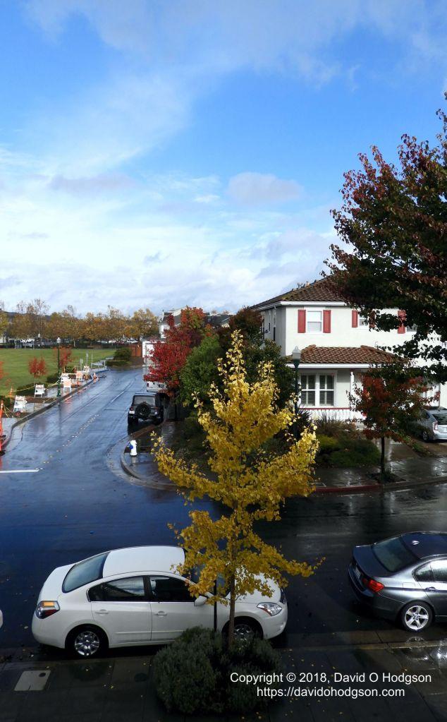 Rain, Sun & Autumn Leaves