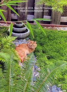 Ginger relaxing in the Japanese Garden